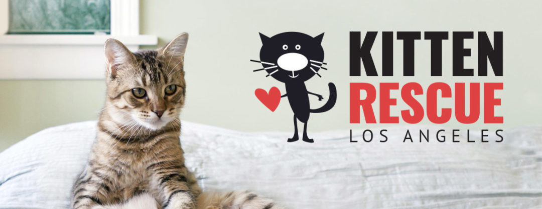 Kitten Rescue's LA Marathon and 5K